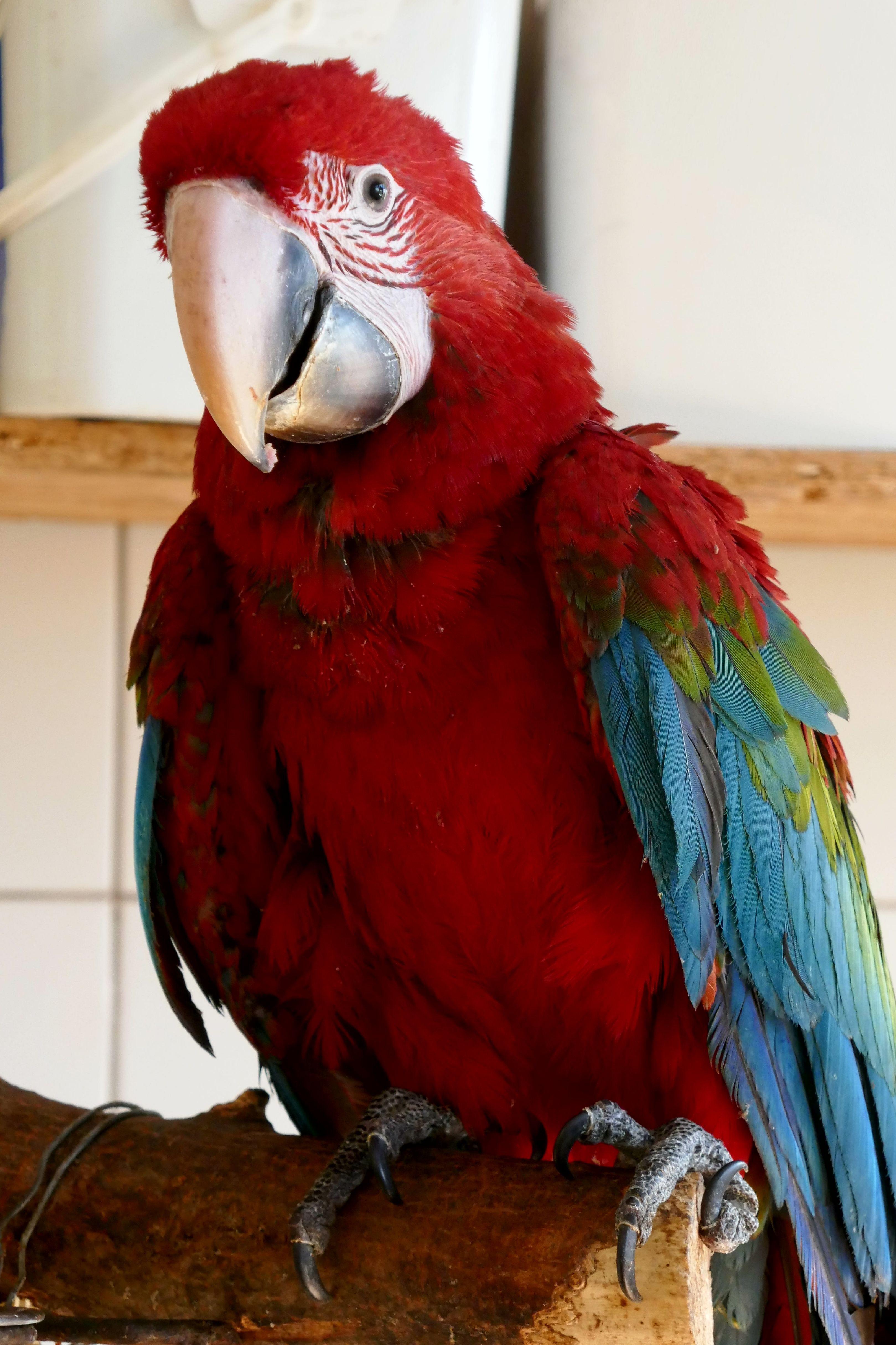 Ara papagájokkal gyarapodott a Debreceni Állatkert!