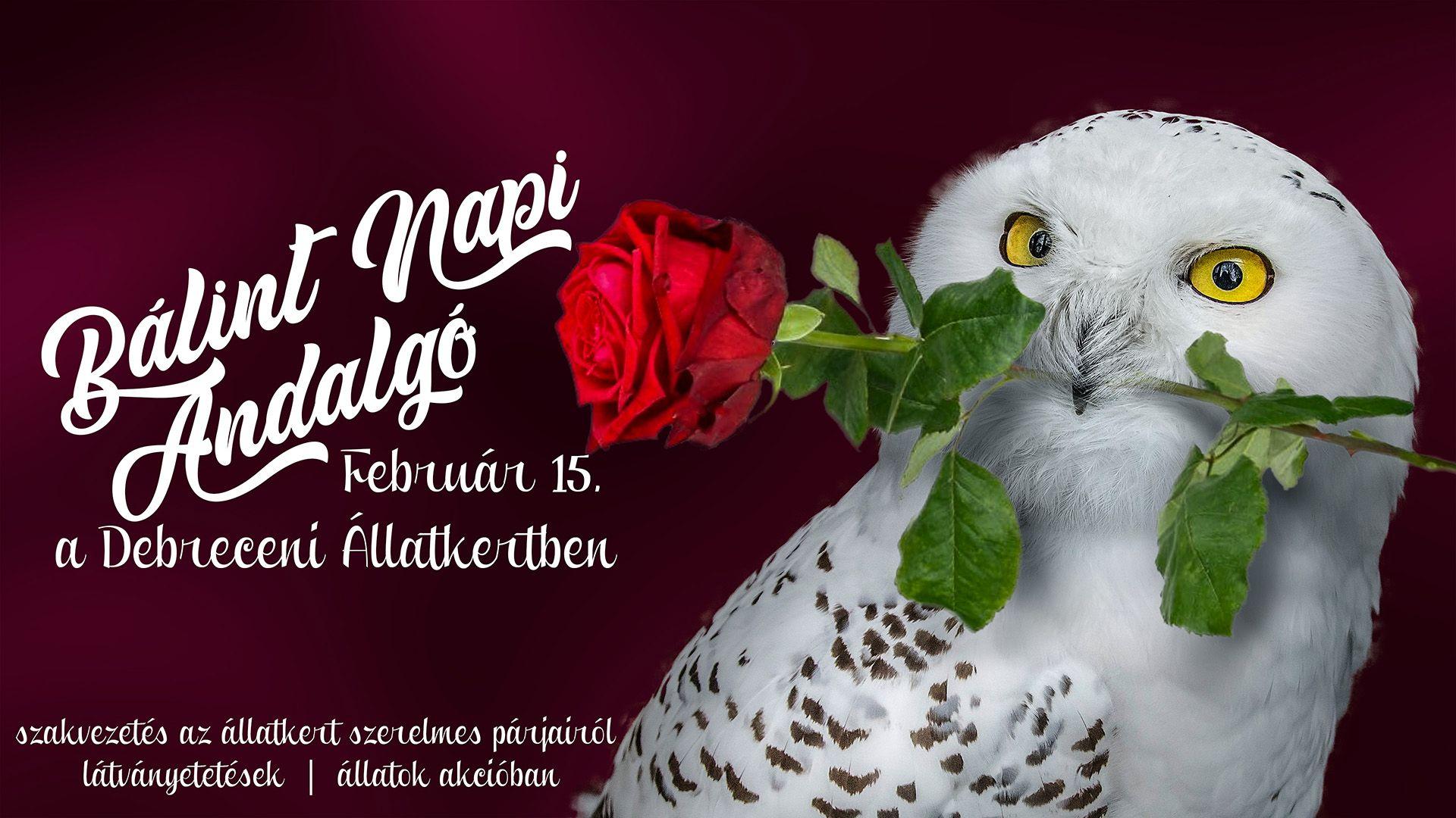 Bálint Napi Andalgó a Debreceni Állatkertben!