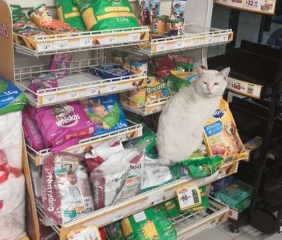 """Ez a cica minden nap elment a boltba, és arról """"győzködte"""" az embereket, hogy vegyenek neki ennivalót"""