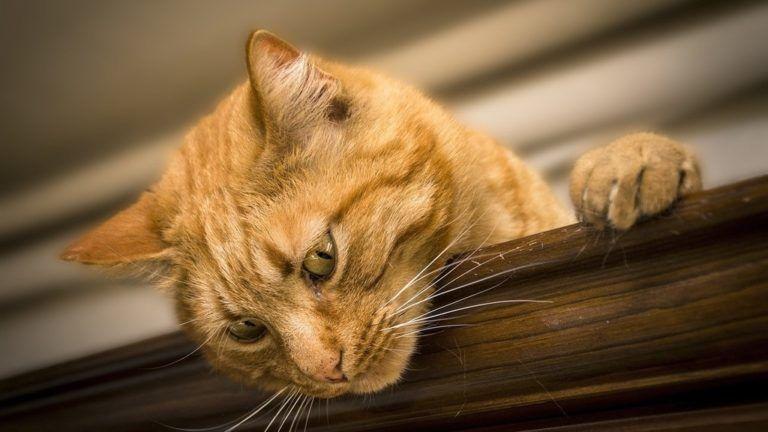 Éhes macskájuknak köszönhetően lettek milliomosok