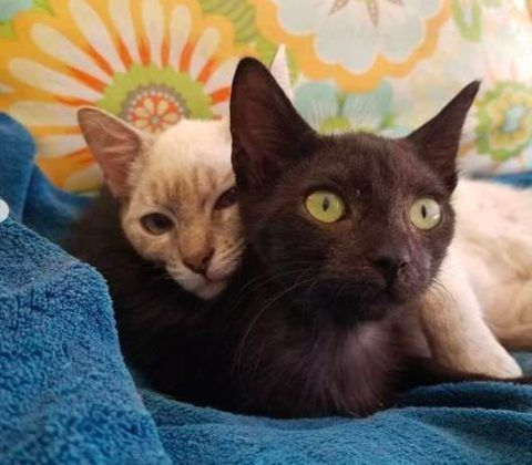 Együtt vagy sehogy: elválaszthatatlan lett a két mentett cica