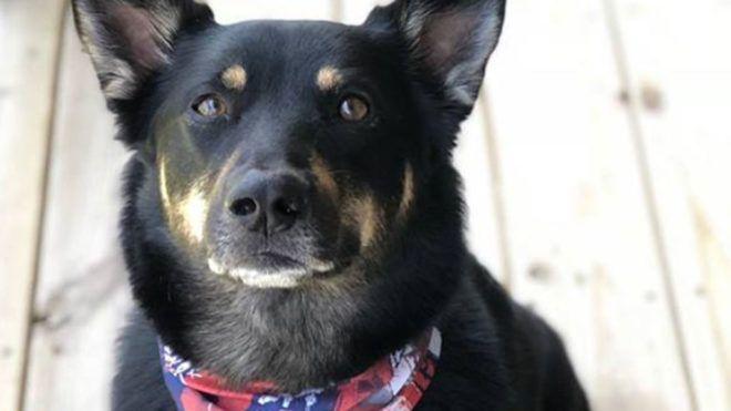 Cukiság! Csak egy dolog tudja igazán megnyugtatni a menhelyről mentett kutyát