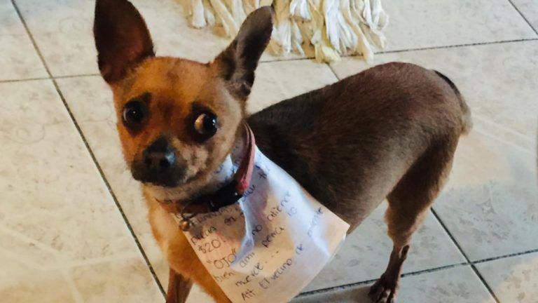 A kutyáját küldte boltba egy zacskó csipszért a karanténban lévő férfi