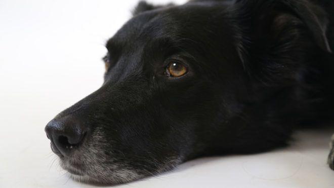 Egy kislány életét mentette meg a hős kóbor kutya