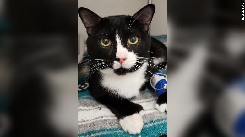 Egy macska beszorult a mosógépbe, ez történt vele, miután végigment a program