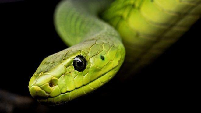 Kígyó - Fotó: Pixabay