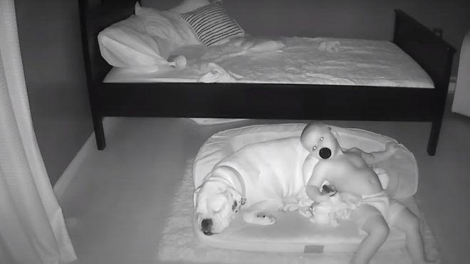 Elolvadunk! Óriás négylábú barátját használja párnának a kisbaba