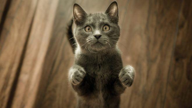Egérnek is szűkös lenne a netről rendelt macskaágy