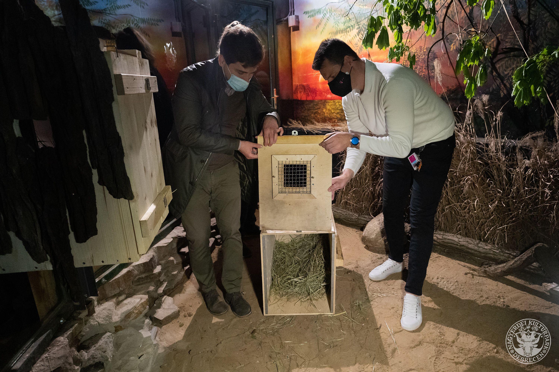 Afrika titokzatos éjszakai élővilágába nyújt betekintést a Debreceni Állatkert új társas bemutatója!