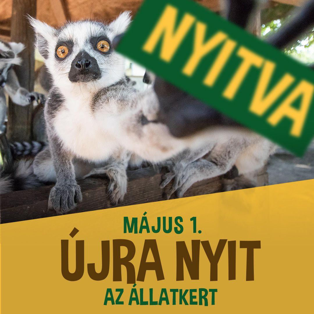 Kényszerű korlátok között, de mától újra kinyit a Debreceni Állatkert és Vidámpark!