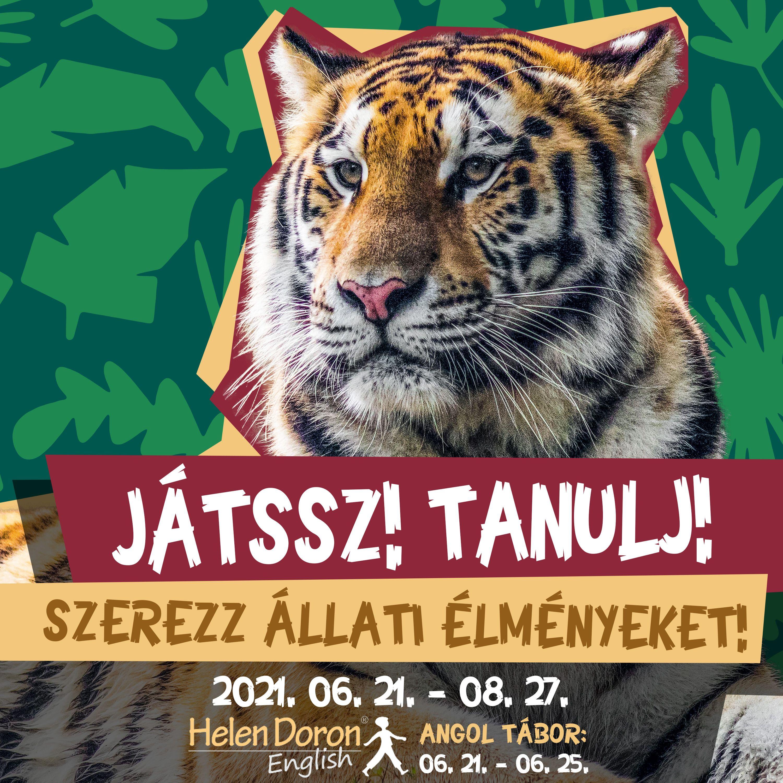 Kicsengő után indul és újdonságokkal vár a Zootábor a Debreceni Állatkertben!