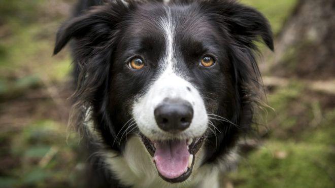 Milliókat örökölt gazdájától egy kutya