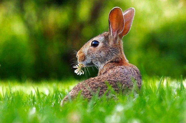 Kellemes Húsvéti Ünnepeket Kíván neked a Lépés Rádió Csapata!