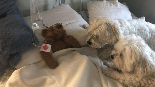 Kórházat épített a kutyái elszakadt plüssjátékának az unatkozó gazdi