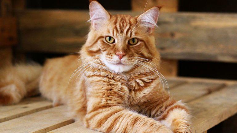 Ez a macska az egyetem Casanovája