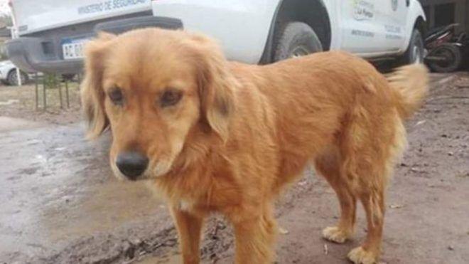 Egy éve vár letartóztatott gazdájára egy kutya a rendőrőrs előtt
