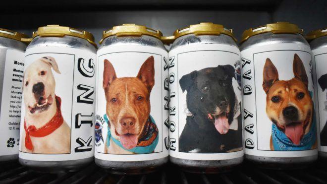 Kép: Facebook/MotorworksBrewing - Meglátta a sörös dobozt, rájött, hogy hol van a három éve eltűnt kutyája